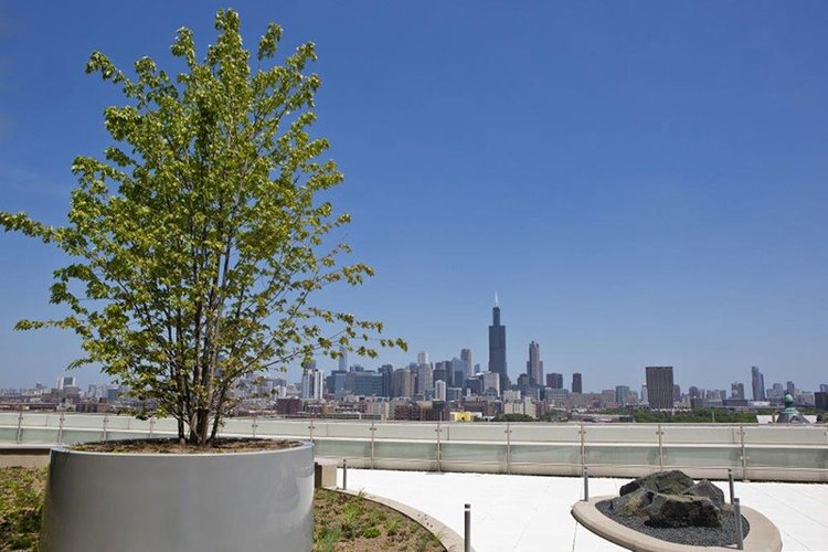 rooftop garden with Chicago skyline in the background