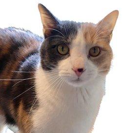 zoey cat