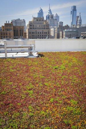 Rooftop garden at Thomas Jefferson University Hospital