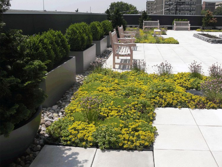 rooftop garden with benches